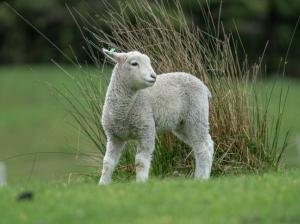 【ニュージーランド】大自然を満喫+英語を学びながら動物と触れ合う!ファームステイ体験談