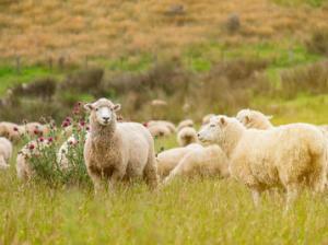 ワーホリに行くならおすすめのニュージーランド 魅力は自然だけじゃない!