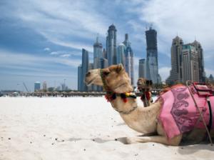 【コロナ禍の留学相談】UAE/ドバイで英語も文化も学ぶ!社会人留学