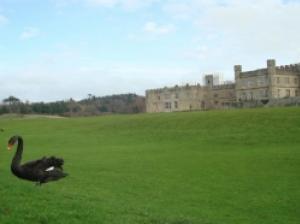 華麗なブラック・スワンがご挨拶 貴婦人の城「リーズ城」