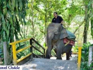 マレーシアの動物たちが集合 ロッカウィ・ワイルドライフ・パーク